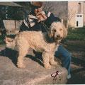 Fenka 1996