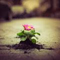 62|365 31.01.2016 - Ultra Gardening