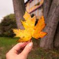 314|365 09.10.2016 - Der Herbst ist da