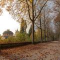 332|365 27.10.2016 - Schwetzinger Schlosspark