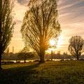 350|365 14.11.2016 - Herbstsonne an der Neckarwiese
