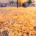341|365 05.11.2016 - Friedrich-Ebert-Platz, Heidelberg