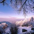 50|365 19.01.2016 - Blick auf Heidelberg