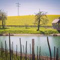 142|365 20.04.2016 - Landgut Lingental