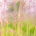 186|365 03.06.2016 - Durch die Blütenpracht