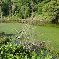 旧河川(三日月湖)。立ち木がかっこいいけど、引っ掛け注意!