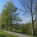 Birkenhalballee auf dem Weg die Egghaldenstrasse hinunter Richtung Amriswil Pt. 23