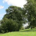 geschützte Hecke am Ende der Birkenhalballee in östlicher Richtung