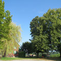 Weitere Bäume am selben Ort