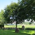 Die gemütliche Gartenbeiz des Restaurants Weinbergs mit weiteren geschützten Bäumen