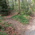 Hier beginnt das Alternativweglein durch den schattigen Wald
