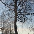Birkenallee im Winter Pt. 2