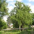 Die Birken auf der Südseite sind heute alle weg. Der Nussbaum ganz rechts ist stehen geblieben.