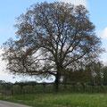 Und nach dem Abstecher auf dem Weglein oberhalb der Kirche sieht man den Nussbaum bei Pt.9