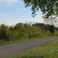 Die junge Niederhecke nach dem Schützenhaus südlich von Niederaach beim Pt. 18