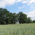 Die Baumreihe am Biessenhoferbach vom Bänkli aus (Pt. 14)