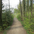 Am Ausgang des Waldes vor dem Reservoir Oberaach