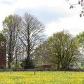 Die Bäume des Friedhofes Oberaach kommen ins Blickfeld