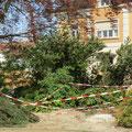 Die kleinen Bäume und Sträucher sind gefällt, Bank und Brunnen sind weg