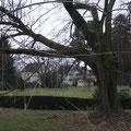 Die Visiere stehen und ragen teils in die Bäume hinein.