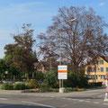 Noch stehen die Bäume des Bahnhofpärklis