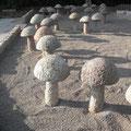 Steinpilze in Granit