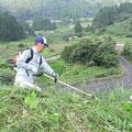 8月2日朝7時から草刈り
