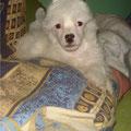 Король подушки))