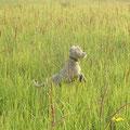 Охотничья собака))