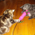 Wer bekommt den Cat Tail