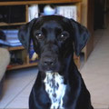 Epsy, 1 an, croisée labrador et dalmatien. Une bien jolie princesse avec un sacré caractère. Epsy est en pleine crise d'adolescence et nécessite donc une grande rigueur de la part des membres de la famille.