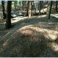 散布前の竹チップ