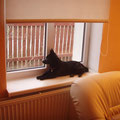 01.2008 Is there somebody coming? Meri waiting for the guests :)