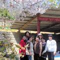 大きな素敵な桜の木を8名で独占する贅沢な時間でした。