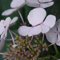 Fleuristes - Mariages Landes Chalosse
