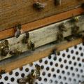 apiculture activité des racines en chantier grenoble
