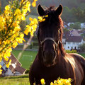 Pferd/