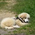 Die kleine ist müde, die Wurzel, ein willkommener Anlass zur Pause.