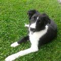 Unser neuer Hund Jarin