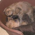 Seebär spielt mit seiner kleinen Schwester