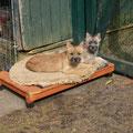 Shannon und Seetje beim Sonnenbad