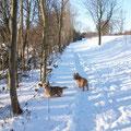 am Schneedeich