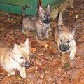 Questa-Querida, mit Brüdern im Garten, 21.11.2011
