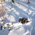 Wintermaulwurfshügel...