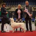 Weihnachtsausstellung Olten - BOB Junior / BOS / BIS Junior Winner