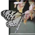 飛び出す蝶