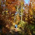 Waldweg               Foto: Martin Knaus