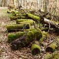 Die Natur holt alles zurück             Foto: Martin Knaus