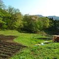 新緑のファーム 右奥は道具小屋です