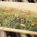 Fotodruck auf Holz, Glas oder Alu